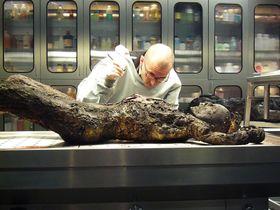 Bild: Dr. Mark Benecke - Die Leiche aus der Biotonne