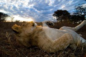 Bild: Die Welt im Sucher: Südafrika