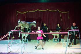 Bild: Circus Barus in Büdingen - Wir bringen Freude in Ihre Stadt