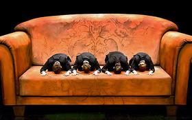 Bild: Unterwerfung - Zeitgenössisches Stück von Michel Houellebecq