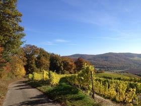 Bild: Wald-Wein-Wasser - Wald-Wein-Wasser