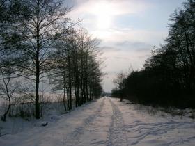 Bild: Winterwanderung in der Kleinen Heide