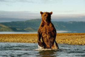 Bild: Unter Bären