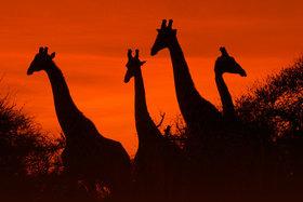 Bild: Südafrika - Von Kapstadt zum Krügerpark