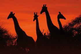 Bild: Kinzigtal-Weltweit - Südafrika - von Kapstadt zum Krügerpark