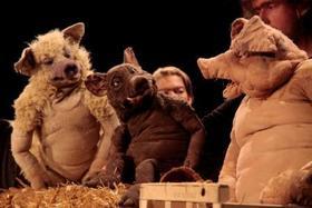 Bild: Drei Schweine