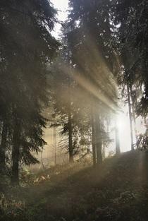 Bild: Sagenwanderung mit der Breitnauer Bauernbühne