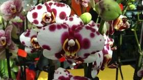 Bild: Orchideenausstellung
