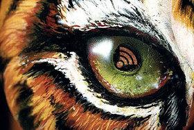 Bild: Keine Party für den Tiger!