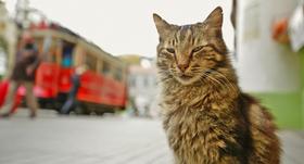Bild: Kedi – von Katzen und Menschen