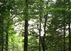 Bild: Geführte Wanderung durch den Wingster Wald