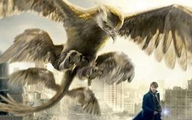 Bild: Fantastic Beasts and Where to Find Them (englische Originalfassung)