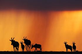 Bild: 19. Norddeutsche Naturfototage