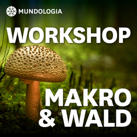 Bild: MUNDOLOGIA-Workshop: Makro & Wald