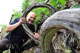Bild: Große Weinbergwanderung - Weinwanderung mit moderierter 6-Weinprobe für 3,5h