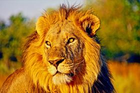 Bild: Abenteuer Fernweh - Tansania: Ostafrika vom feinsten (Vortrag)
