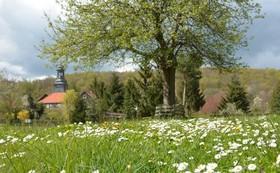 Bild: Grüner Samstag  - Kräutertag mit Frühlingsmarkt