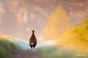 Bild: »Mein Weg raus…«