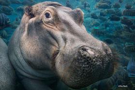 »Bedrohte Tierarten«