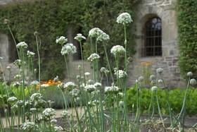 Bild: Garten- und Klausurführung