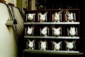 Bild: Forschung der Zukunft – sind Tierversuche noch zeitgemäß?
