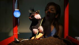 Bild: Briefe vom Maulwurf an den Hasen - Theater im Geschichtenzelt