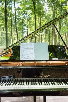 Bild: Waldkonzert Flügel Solo