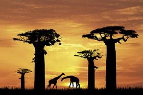 Bild: Inselsafari - Faszination Afrika im Bodensee