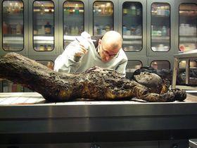 Bild: Dr. Mark Benecke - Mumien aus Palermo