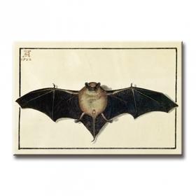 Bild: Die Fledermaus