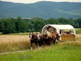 Bild: Im Planwagen durch den historischen Ortskern von Gündelbach - Im Planwagen durch den historischen Ortskern von Gündelbach