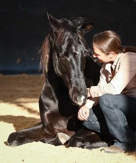 Bild: Pferdegerecht kommunizieren