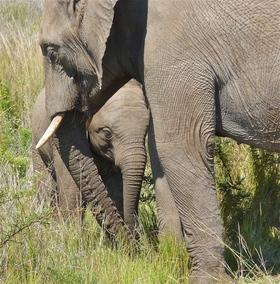 Bild: 10.000 km durch den Süden Afrikas