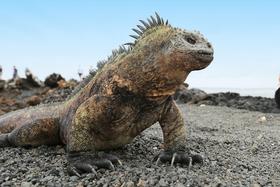 Bild: Abenteuer Fernweh: Ecuador - Höhepunkte Ecuadors und Inselhüpfen auf Galapagos (Vortrag)