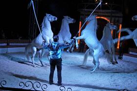 Bild: Weihnachtscircus Ulm - Vorpremiere zugunsten der Aktion 100 000 und Ulmer helft
