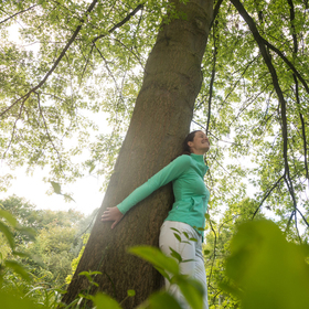 Bild: Wald-Wellness