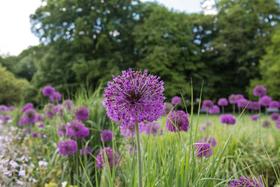 Bild: Durch den Botanischen Garten