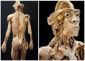 Bild: Anatomische Ausstellung echte menschliche Körper