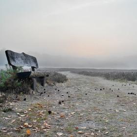 Bild: Heidefahrt mit dem Planwagen