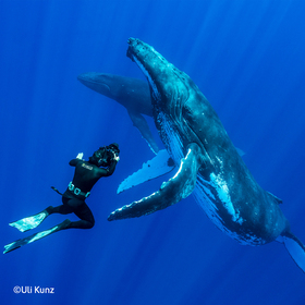 "Multivisionsshows Umweltfotofestival »horizonte zingst« 2019 - Uli Kunz – ""Leidenschaft Ozean"""
