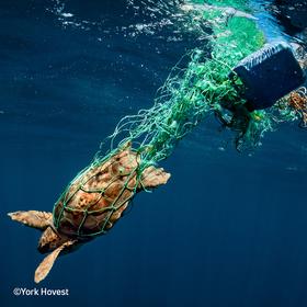 "Bild: Multivisionsshows Umweltfotofestival »horizonte zingst« 2019 - York Hovest – ""100 Tage Ozeane – Die Helden der Meere"""