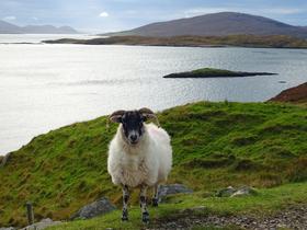 Bild: Schottland – Live-Reportage von Andreas Eller