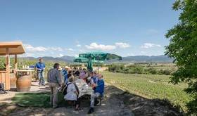 Bild: Kulinarische Weinwanderung -  Bad Krozingen