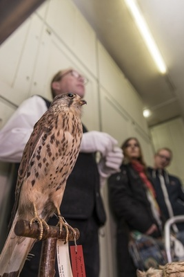 Bild: Chefvisite im Vogelkundemuseum