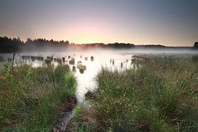 Bild: Fotografiekurs im Moor