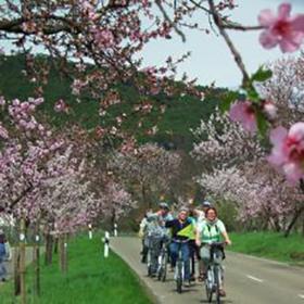 Bild: Pedelec-Probefahrt Mandelblüte - Südliche Weintraße