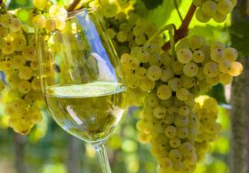 Bild: Vollmond-Weinführung Insel Mainau