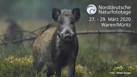 Bild: 21.Norddeutsche Naturfototage - präsentiert von AC Foto