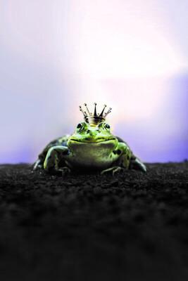 Bild: Theater-Ensemble tgsm: Der Froschkönig