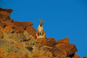 Bild: Australien – Traumzeit – Hautnah